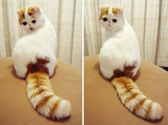 Фото 18 - пушистые красавчики 30 самых чудесных котиков со всего мира