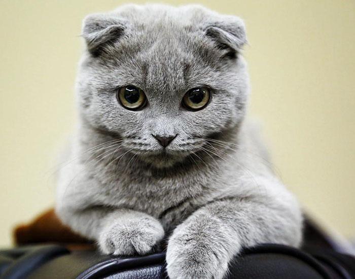 Фото 19 - пушистые красавчики 30 самых чудесных котиков со всего мира