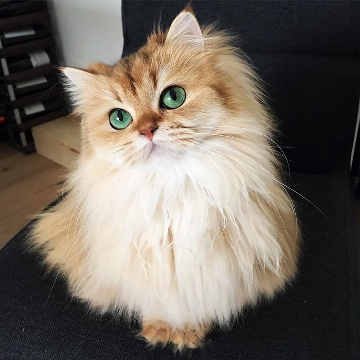 Фото 2 - пушистые красавчики 30 самых чудесных котиков со всего мира