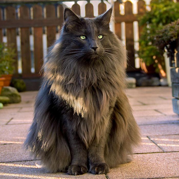 Фото 22 - пушистые красавчики 30 самых чудесных котиков со всего мира