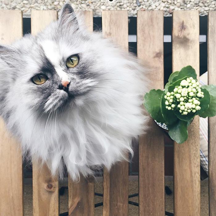 Фото 23 - пушистые красавчики 30 самых чудесных котиков со всего мира