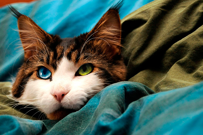 Фото 24 - пушистые красавчики 30 самых чудесных котиков со всего мира