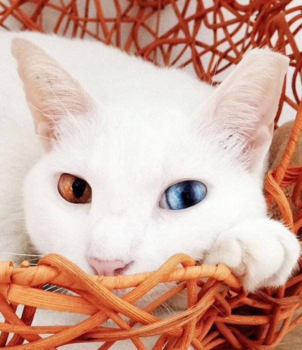 Фото 26 - пушистые красавчики 30 самых чудесных котиков со всего мира