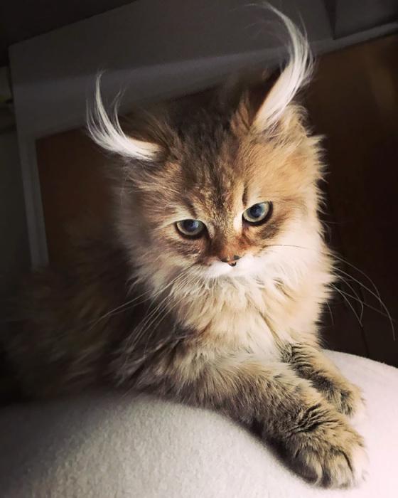 Фото 3 - пушистые красавчики 30 самых чудесных котиков со всего мира