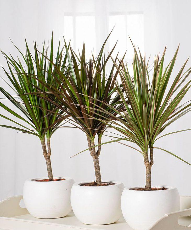 Фото 4 - 9 самых неприхотливых растений очищающих воздух от вредных веществ