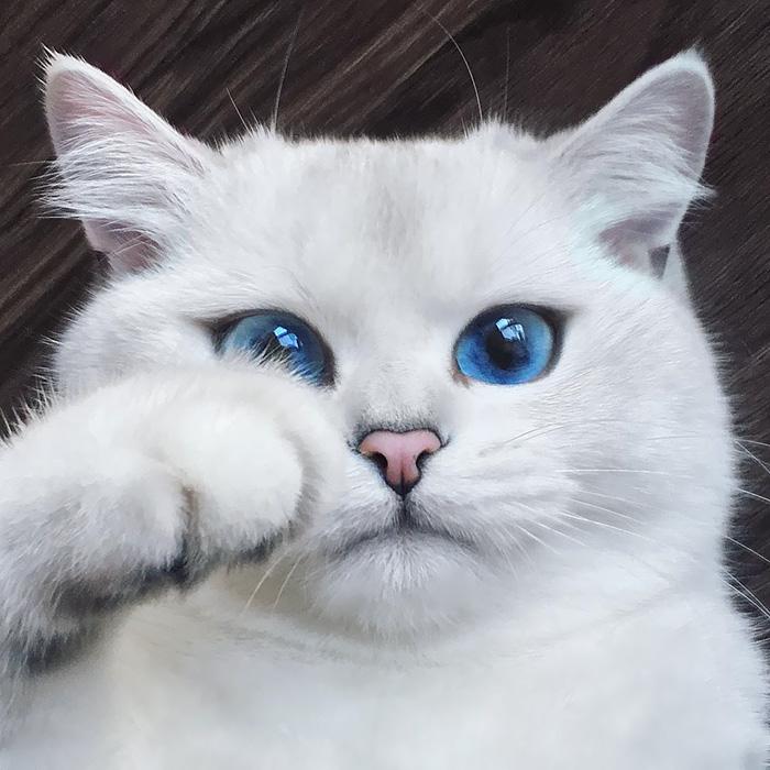 Фото 4 - пушистые красавчики 30 самых чудесных котиков со всего мира