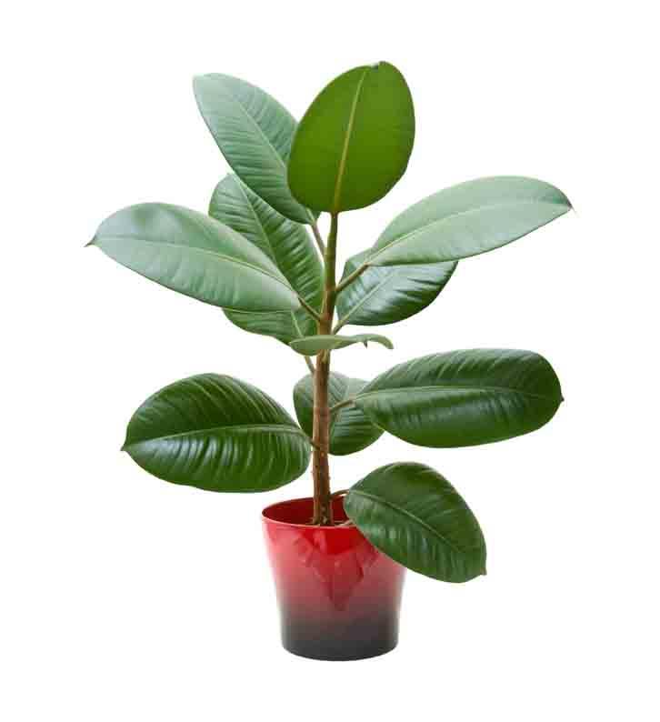 Фото 5 - 9 самых неприхотливых растений очищающих воздух от вредных веществ