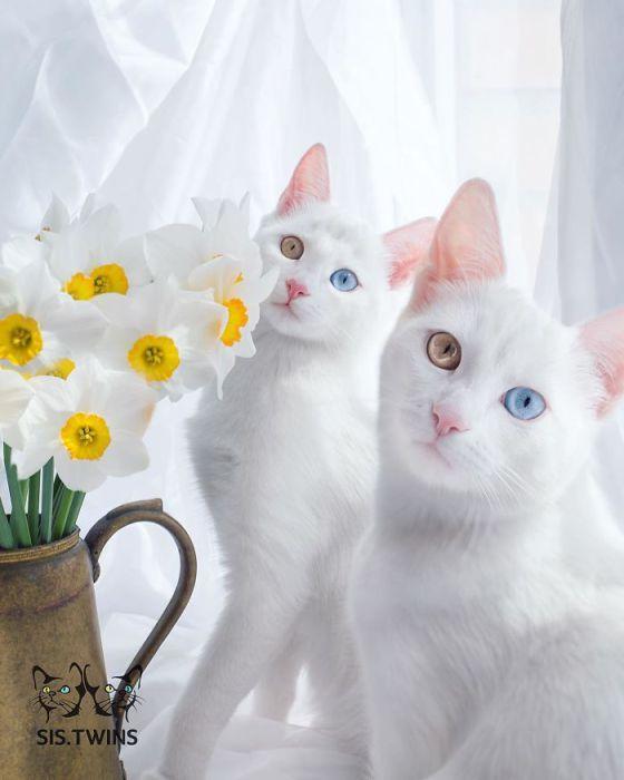 Фото 6 - пушистые красавчики 30 самых чудесных котиков со всего мира