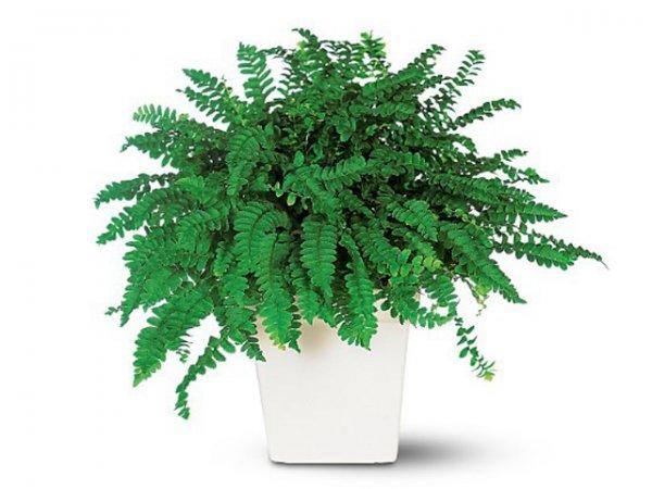 Фото 7 - 9 самых неприхотливых растений очищающих воздух от вредных веществ