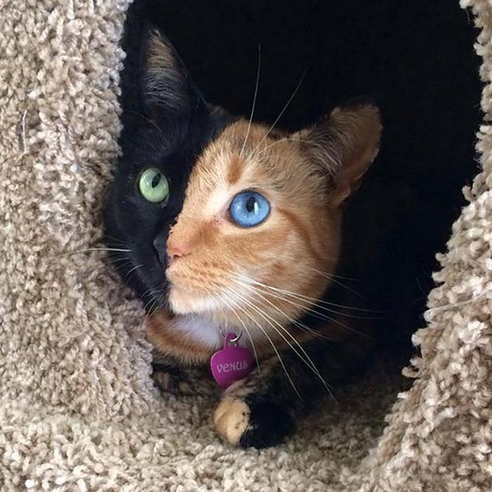 Фото 8 - пушистые красавчики 30 самых чудесных котиков со всего мира