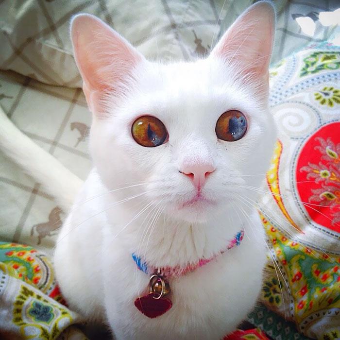 Фото 9 - пушистые красавчики 30 самых чудесных котиков со всего мира
